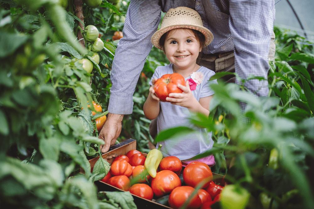 Menina sorri e segura um tomate em uma estufa com seu avô mais velho.